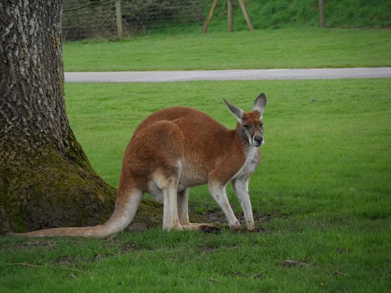 ma visite au zoo des Sables d'Olonne Sam_0414