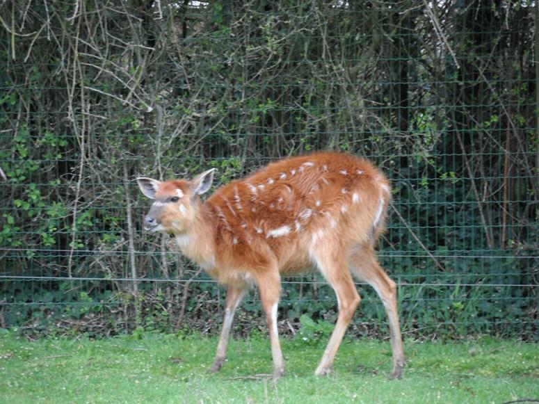 ma visite au zoo des Sables d'Olonne Sam_0415