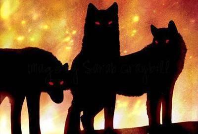 Attention au Chien Noir Black_10