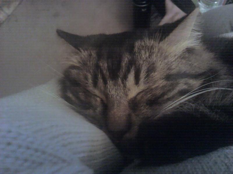 présentation de mes chats - Page 2 2011-013