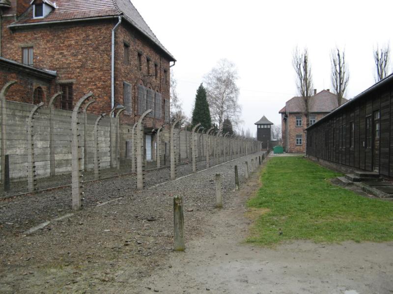 Why we fight: Auschwitz-Birkenau Voyage29