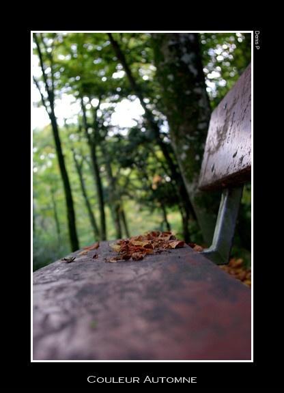 les feuilles mortes .. Automn10