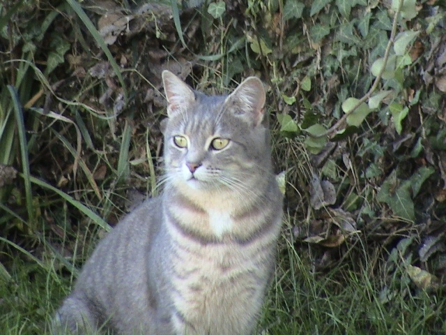 Sondage:votre race de chat préférée Jardin12