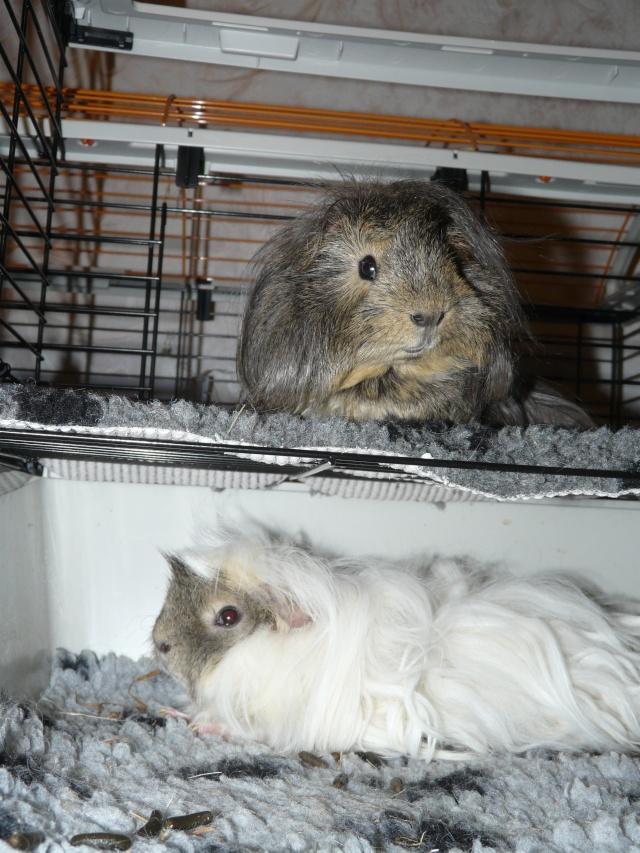 Nos bêtes à poils, plumes, écailles, branchies... ^^ P1020111