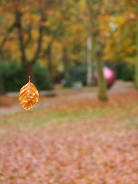 les feuilles mortes .. 2007-110