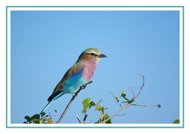 La cage aux oiseaux 2008-011