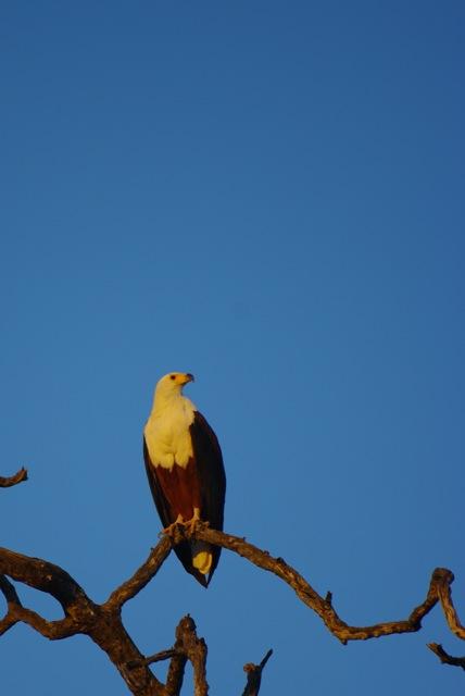 La cage aux oiseaux 2008-012