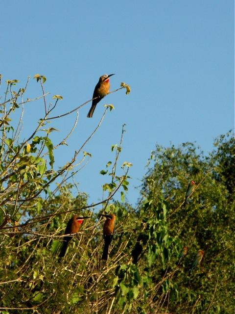 La cage aux oiseaux 2008-014