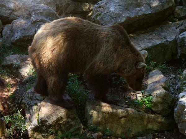 Au zoo avec zizi L_ours10