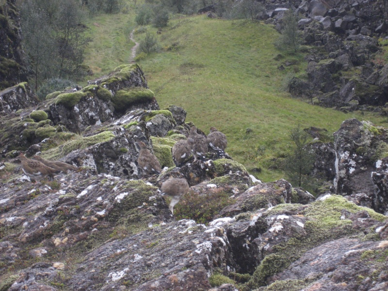 oiseau islandais Img_5012
