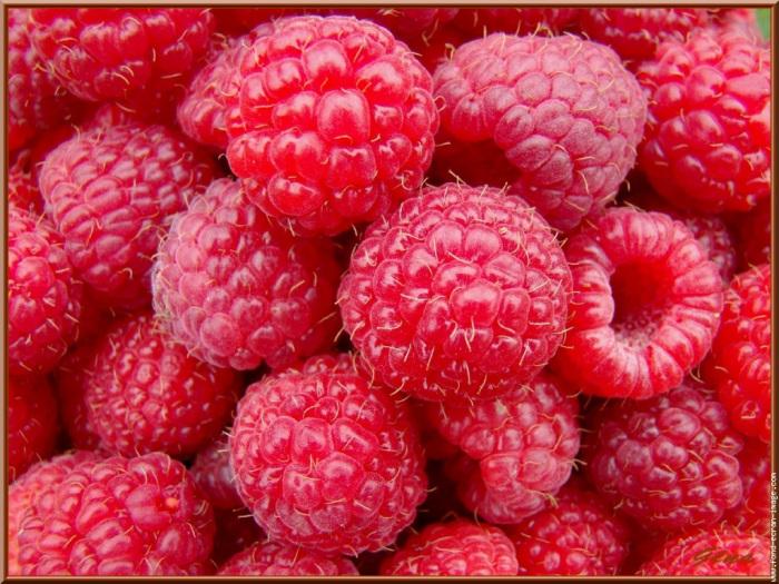Fruits de saison  Frambo10