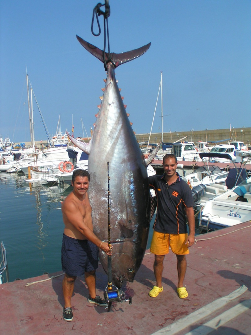 hondarrubia 233 kg de rubio 460-110