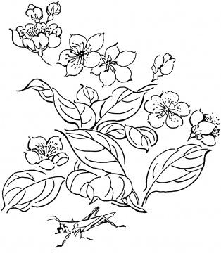 Floricele 0010