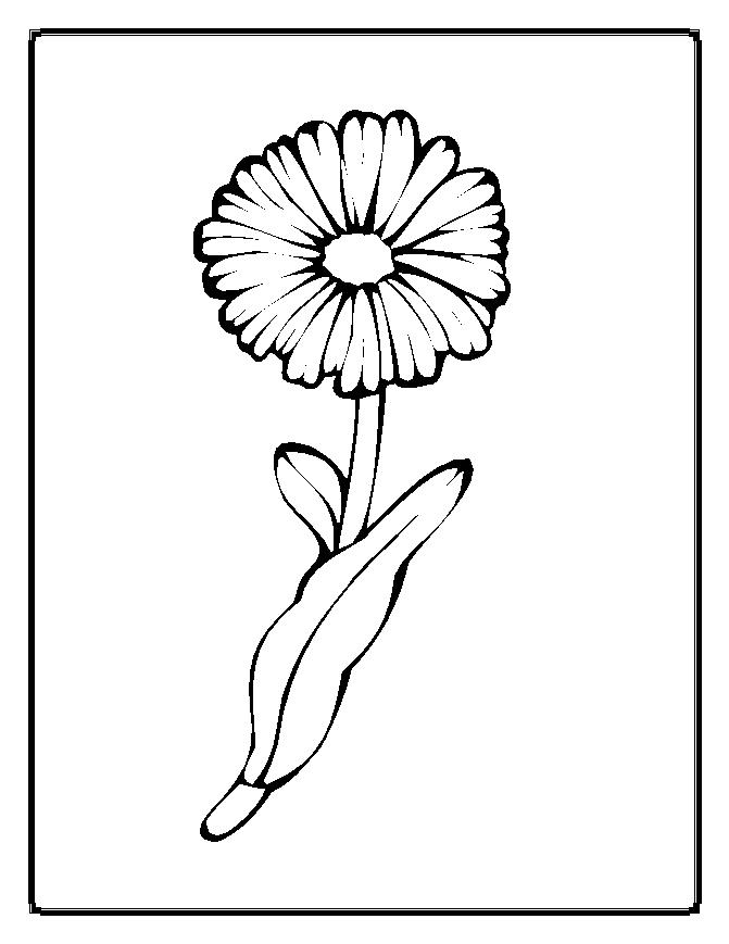 Floricele 310