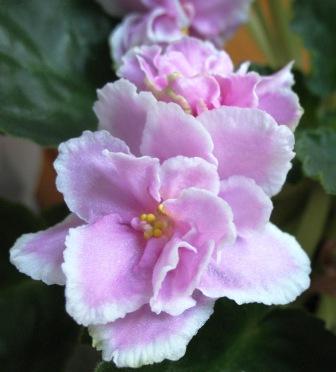 Розовая сказка (Макуни) 29_10_16