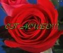 НАДЕЖДА, с Днем Рождения!!!!! Nd-dd10