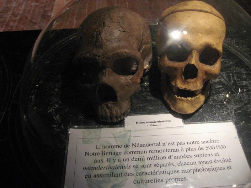 Néandertal à Angoulême Expo_e15