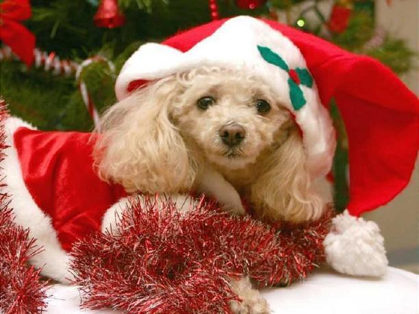 Christmas Time 24859_10