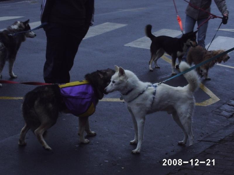 Rencontre en région parisienne le 21 décembre 2008 - Page 11 Phot0213