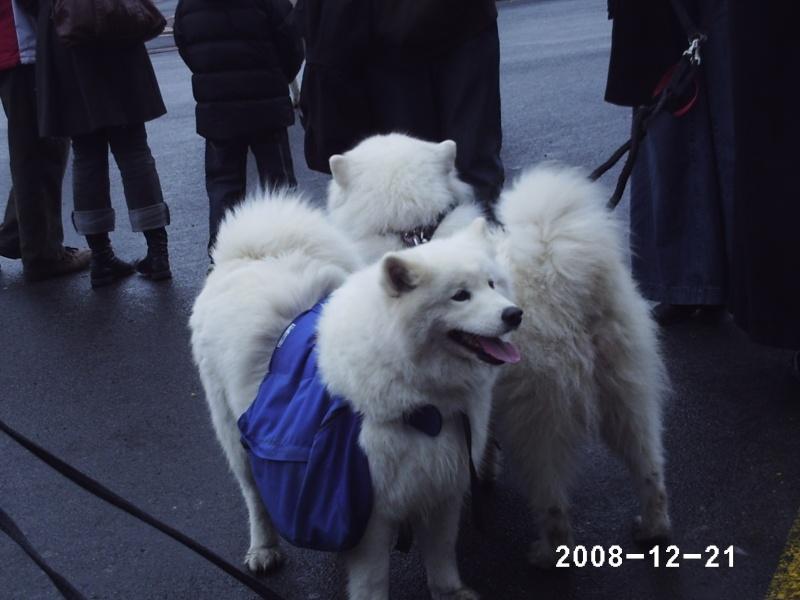 Rencontre en région parisienne le 21 décembre 2008 - Page 11 Phot0218