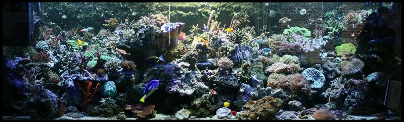 le reef tank d'harold Bac1011