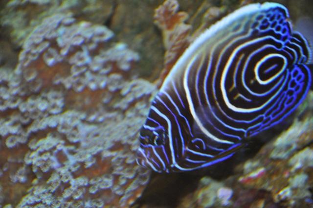 le reef tank d'harold Nikon_48