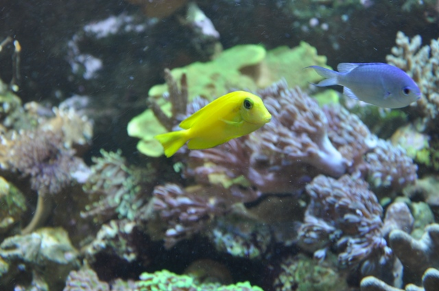 le reef tank d'harold Nikon_49