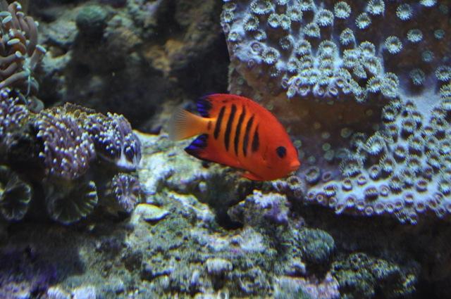 le reef tank d'harold Nikon_50