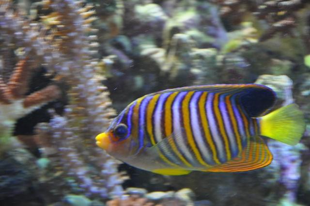 le reef tank d'harold Nikon_51