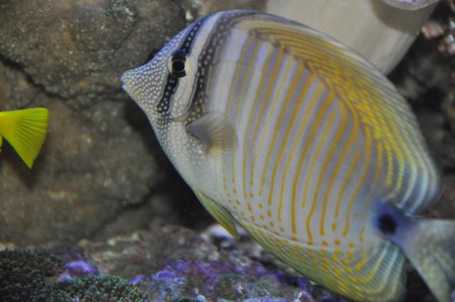 le reef tank d'harold Nikon_52