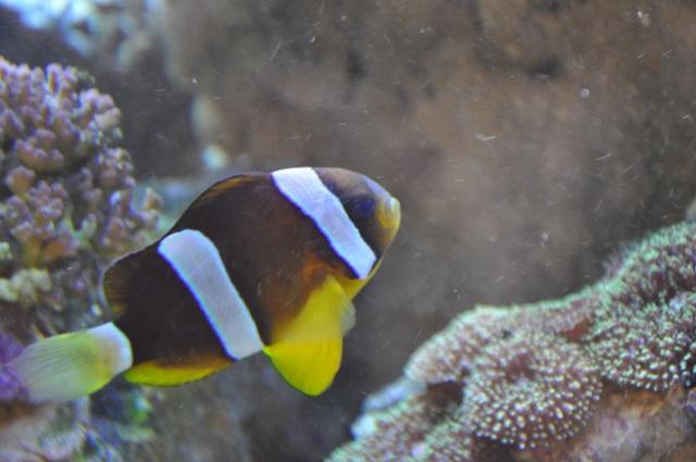 le reef tank d'harold Nikon_53