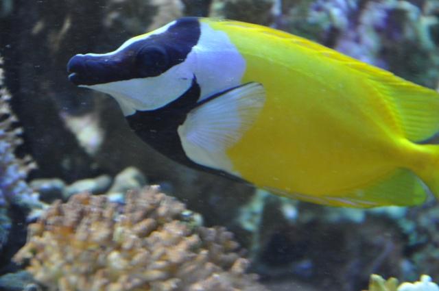 le reef tank d'harold Nikon_55