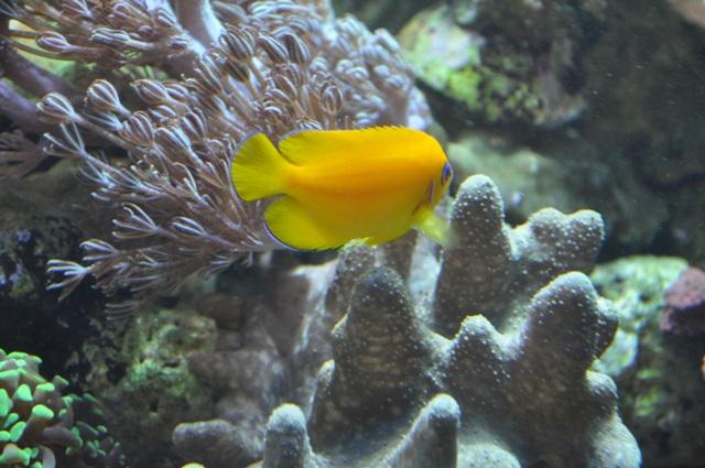 le reef tank d'harold Nikon_58