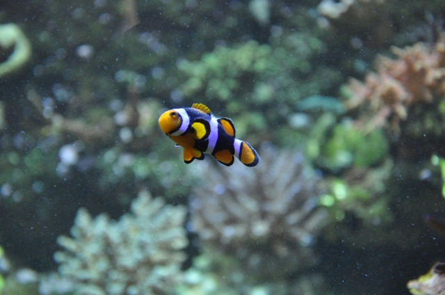 le reef tank d'harold Nikon_59