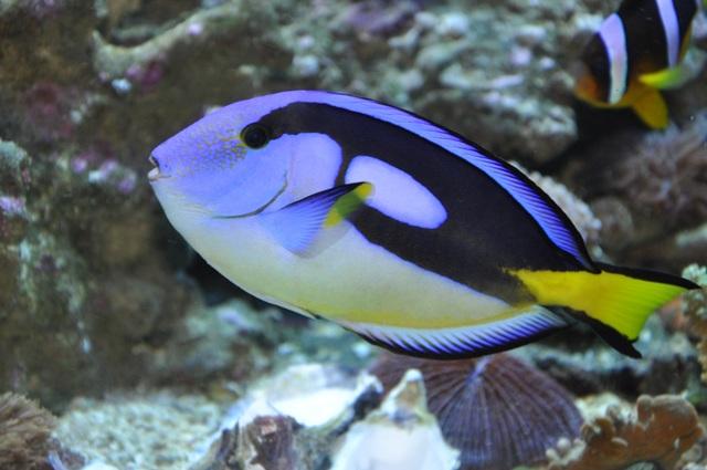 le reef tank d'harold Nikon_75