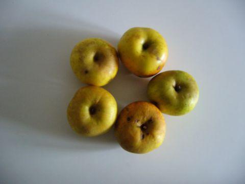 manzanas asadas a la crema ( dedicado especialmente a Fraytor) El_pro10