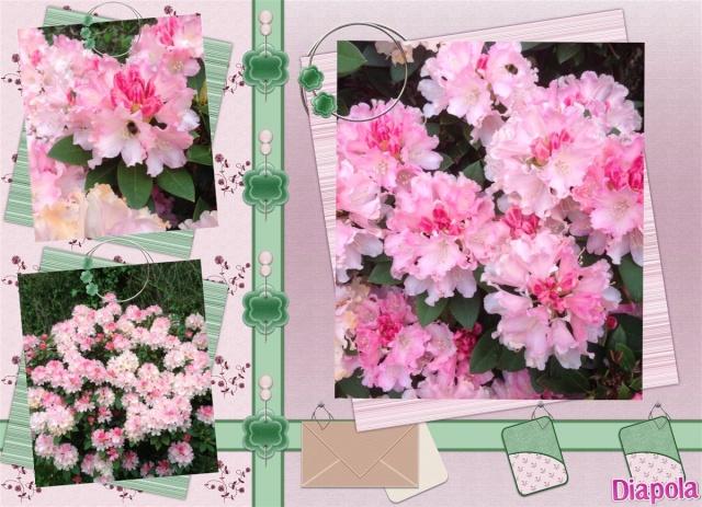 Photos de nos jardins - Page 4 Diapol10