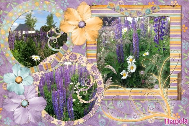 Photos de nos jardins - Page 3 Fleurs10