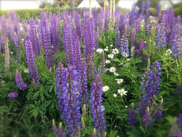 Photos de nos jardins - Page 3 Img_0910