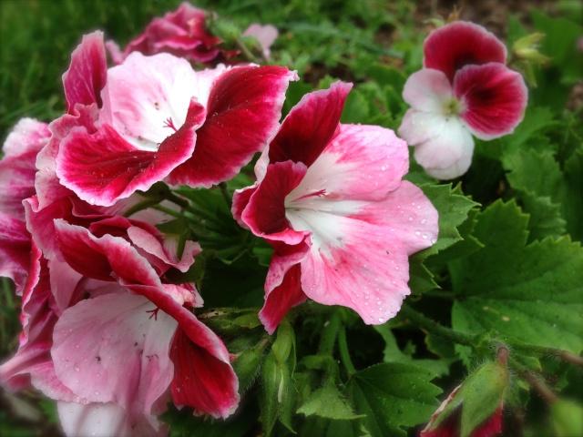 Photos de nos jardins - Page 3 Palarg10
