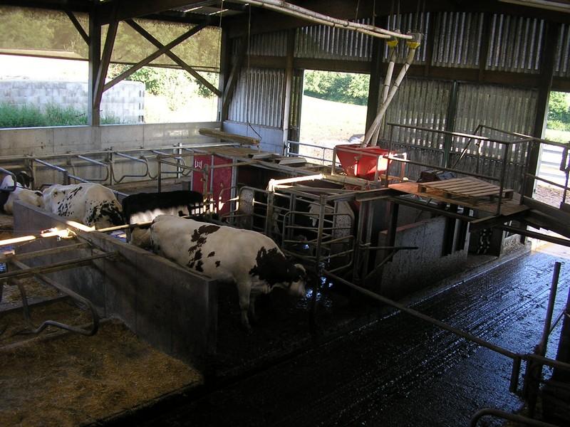 Batiment d'élevage P7111311