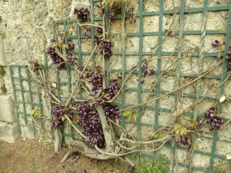 Quelques plantes du parc  P1030211