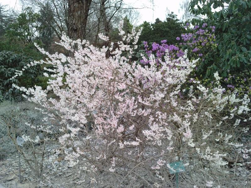 Floraisons hivernales  P1602113