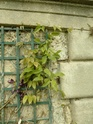 Quelques plantes du parc  P1030210