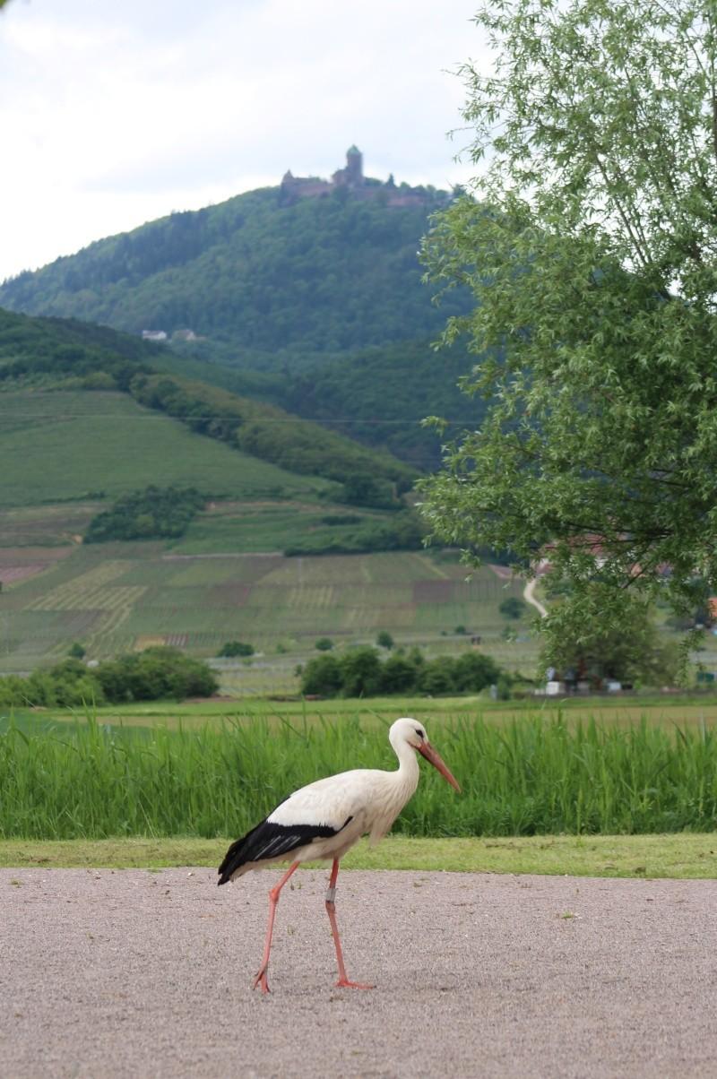 L'Alsace en photo Img_4210