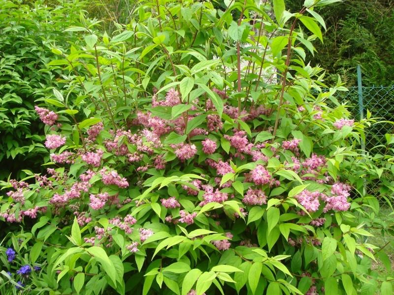Photos de nos jardins - Page 2 Dsc04412