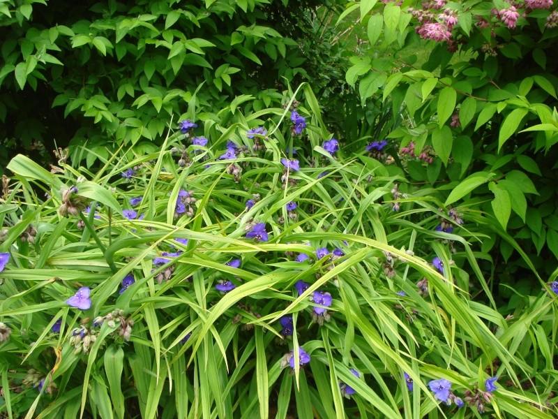 Photos de nos jardins - Page 2 Dsc04414