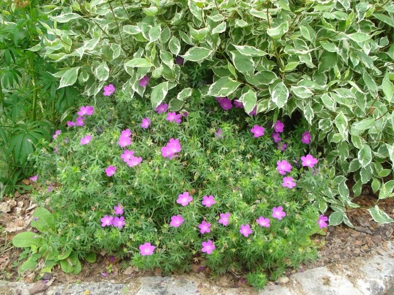Photos de nos jardins - Page 2 Dsc04415