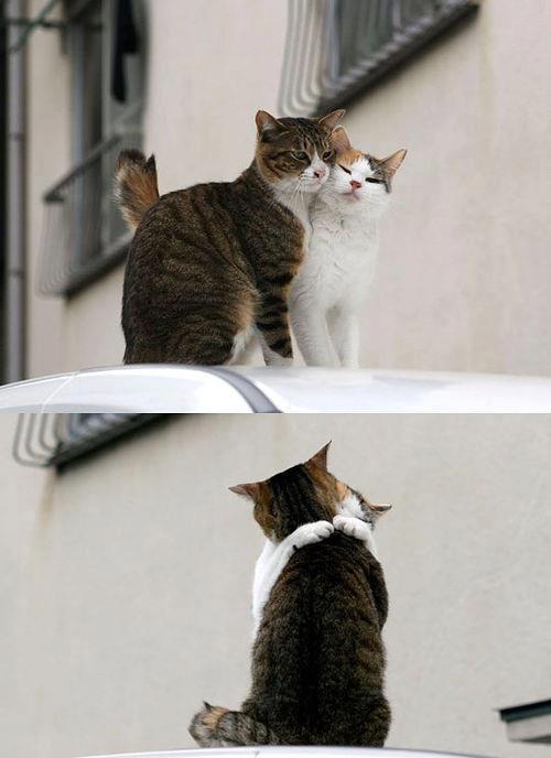 Les chats vu par Caro... 69116_10