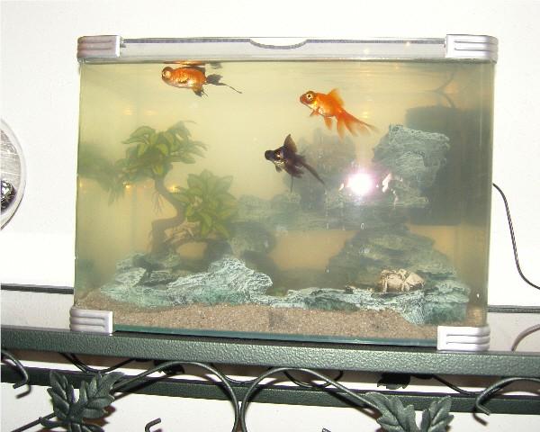 Filtre pour aqua contenant des poissons salissants Aqua110